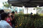 An Giang: Hoa cúc đặc biệt cháy hàng ở lần đầu ra mắt