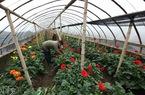 Cho vay vốn phát triển nông nghiệp công nghệ cao