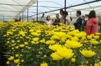 Lâm Đồng: Lập quy hoạch phát triển rau, hoa