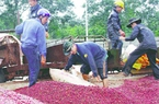 Hội thảo Ban Điều phối ngành hàng cà phê Việt Nam
