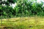 Thoát nghèo nhờ trồng rừng bằng phương pháp hiện đại