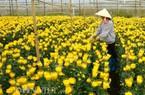 Làng hoa thứ 4 được công nhân làng nghề truyền thống ở Đà Lạt