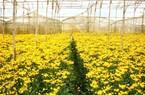 Lâm Đồng: Làng hoa thu 200 tỷ đồng mỗi năm