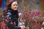 Ảnh: Sắc màu chợ hoa xuân phố cổ ngày cận Tết