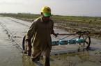 Triển khai chương trình giảm lượng hạt giống lúa gieo sạ