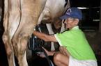 """""""Nông dân nuôi bò sữa sống được không?"""""""