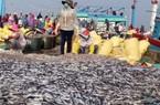 Bội thu cá nục, ngư dân vẫn buồn vì tư thương ép giá