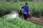 """Miễn thuế sử dụng đất nông nghiệp: Nhà nông sẽ bớt """"tổn thương"""""""
