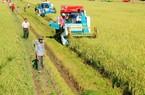 """""""Cởi trói"""" hạn điền: Rời bỏ ruộng đất nông dân vẫn có """"lương"""" ổn định"""
