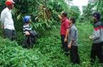 400ha cà phê 20 năm không thuốc BVTV vẫn cho năng suất 5 tấn/ha/năm