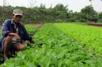 Sức sống mới ở Điện Minh - xã đã cán đích nông thôn mới