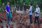 Trai đẹp người Dao học y về quê nuôi gà thả vườn, thu nửa tỷ/năm