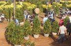 Gia Lai: Người bán hoa trúng to, giảm giá không đáng kể