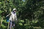 Đồng Nai đi đầu xây dựng nông thôn mới kiểu mẫu