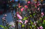 Ghé chợ hoa Hà Nội chỉ họp một lần trong năm vào dịp Tết