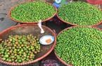 Mận trái mùa quả bé tí, chua loét, bán từng lạng vẫn tranh nhau mua