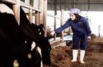 """Dự án bò sữa TH true MLIK và những con số """"khủng"""""""