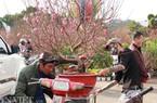Bưởi Diễn, đào Nhật Tân vượt ngàn cây số vào chợ Tết ở Đà Lạt