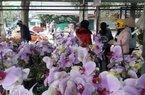 Thái Nguyên: Người dân nườm nượp săn hoa, cây cảnh dịp Tết