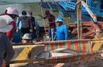 Đầu năm cá ngừ đại dương ồ ạt về bờ, ngư dân khiêng cá mỏi tay