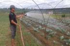 Đà Nẵng: Vốn Quỹ hỗ trợ nông dân - đòn bẩy giúp nông dân làm giàu