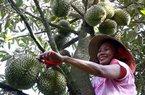 Ảnh hưởng dịch cúm corona, nông sản tìm về nội địa