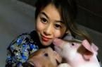 Hô hấp nhân tạo cho... lợn, cô gái đút túi tiền tỷ dễ dàng
