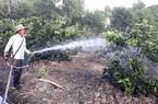 Hoa màu miền Tây khô cháy, 2 tỉnh ban bố tình trạng khẩn cấp