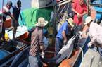 """Gỡ """"thẻ vàng"""" hải sản: Nhiều nơi làm còn lơ là, chưa quyết liệt"""