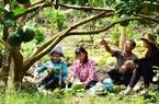 Long Khánh: Du khách tấp nập đến câu cá, thưởng ngoạn vườn kiểu mẫu