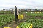 NHÌN RA THẾ GIỚI - Giữa đỉnh điểm dịch  COVID-19, nông dân Trung Quốc trở lại với công việc đồng áng