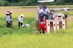 Dịch Covid-19: XK gạo sang Trung Quốc ảm đạm, thấp thỏm lo giá lúa