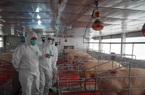 Bộ NNPTNT đề nghị doanh nghiệp giảm giá heo hơi xuống 70.000đ/kg