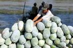 Thí điểm bảo hiểm nông nghiệp: Vẫn xa tầm tay nông dân