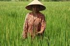 Bảo hiểm nông nghiệp: Phí cao, bồi thường thấp