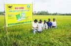 Hướng tới một nền sản xuất nông nghiệp bền vững