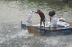 Cần gần 61.000 tỷ đồng  phát triển ngành thủy sản