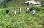 Giúp vốn cho hộ nghèo đầu tư dài hạn