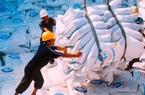 Việt Nam trúng thầu  800.000 tấn gạo