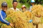 Người trồng lúa vơi bớt âu lo