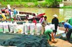 Việt Nam trúng thầu 800.000 tấn gạo: Giá thu mua lúa tăng vọt