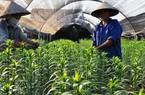Nông thôn khởi sắc, nông dân thoát nghèo