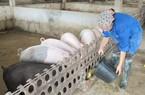 Hà Nam: 600 triệu đồng cho nông dân vay nuôi lợn