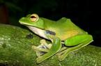 Việt Nam: 99 loài động thực vật mới được phát hiện