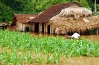 Tháng 9 sẽ ra mắt Liên minh nông nghiệp thích ứng với biến đổi khí hậu