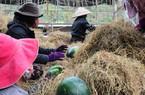 Về tình trạng sụt giảm xuất khẩu nông sản: Sớm bỏ tư duy chạy theo số lượng