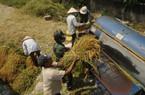 Dấu ấn về tái cơ cấu nông nghiệp