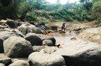 Hạn hán ở Đăk Lăk: Người khát, cây khô héo, trâu bò chết