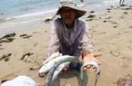Cá miền Trung chết hàng loạt lên báo nước ngoài