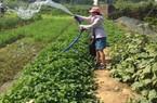 Trồng rau hữu cơ ở Kim Long